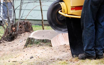rated Highland tree stump removal companies