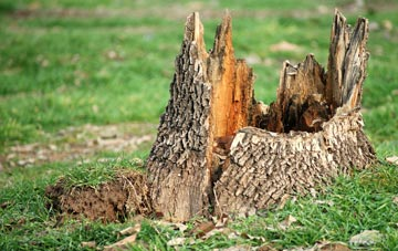 tree stump removal Highland