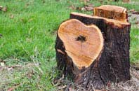 free Highland tree stump removal quotes